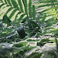 Dazzle Camouflage Patterns In The Garden by Kyra Savolainen