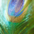 Dazzling Light by Lisa Knechtel