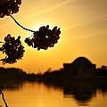 Dc In Bloom V by Shahak Nagiel