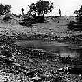 Dead Cattle Contaminated Water Hole Once In 100 Year's Drought Near Sells Arizona Tohono O'odham  by David Lee Guss