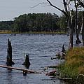 Dead Lake by Susan Patrie