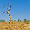 Dead Single Tree by Image World