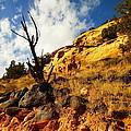 Dead Tree Against The Blue Sky by Jeff Swan