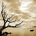 Dead Tree And Sea by Alexey Stiop