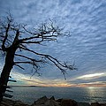 Dead Tree At Otter Cliffs by Stuart Litoff