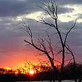 Dead Tree At Sunset by Lori Tordsen