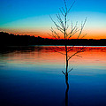 Dead Tree Beauty At Sunset Over Table Rock Lake by JC Kirk