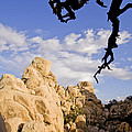 Dead Tree Limb Hanging Over Rocky Landscape In The Mojave Desert by B Christopher