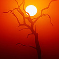 Dead Tree Silhouette And Glowing Sun by Johan Swanepoel