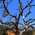 Dead Tree Standing Strong by Jeff Lowe