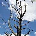 Dead Tree by William Selander
