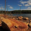 Dead Trees And Rocks by Paul Ward