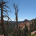 Dead Trees At Bryce Canyon by Christiane Schulze Art And Photography