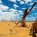 Dead Trees In A Desert Wasteland by Jess Kraft