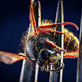 Dead Wasp On A Fork by Panoramic Images