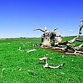 Dead Wood by Holly Blunkall