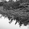 Deadfall Reflection In Black And White by Chuck  Hicks