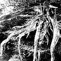 Deadtree by Bill Rush