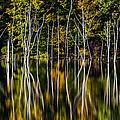 Deadwood by Mihai Andritoiu