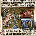 Death And Rebirth Of The Phoenix by British Library