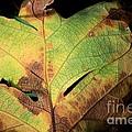 Death Of A Leaf by Sharon Johnston