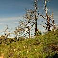 Death On Angel Island by Nick Busselman