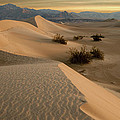 Death Valley Mesquite Flat Sand Dunes Img 0177 by Greg Kluempers