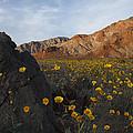 Death Valley Spring 1 by Susan Rovira