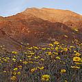 Death Valley Spring 2 by Susan Rovira