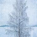 December Birch by Ari Salmela