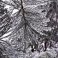 December Freeze  by Shana Rowe Jackson