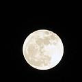 December Moon by Pamela Critchlow