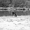 December Snow 007 B-w by Andy Lawless