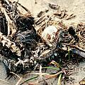 Decomposing Dead Bird by Stephan Pietzko