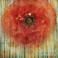 Decor Poppy Blossom by Priska Wettstein