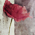 Decor Poppy by Priska Wettstein