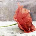 Decor Poppy Red by Priska Wettstein