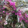 Decorated Palm by Aimee L Maher ALM GALLERY