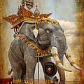 Decorative Elephant by Adrian Evans