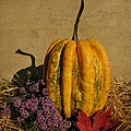 Decorative Gourd  by Chris Berry