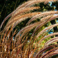 Decorative Grass Wind Autumn And Orton by John Herzog