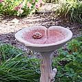 Decorative Lilypad Birdbath by Cynthia Woods