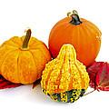 Decorative Pumpkins by Elena Elisseeva