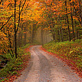 Deep Autumn Forest Road by Harold Rau