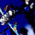 Deep Blue by Carol Lynch