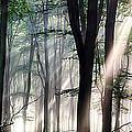 Deep Forest Morning Light by Simon Bratt Photography LRPS