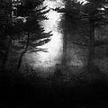Deep In The Dark Woods by Theresa Tahara