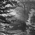 Deep In The Woods by Jeff Breiman