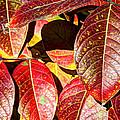 Deep Into Autumn by Heidi Smith