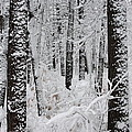Deep Snow In The Forest by Lynn-Marie Gildersleeve